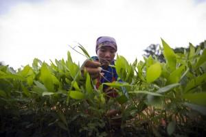 Una imagen que ilustra el trabajo de la FAO