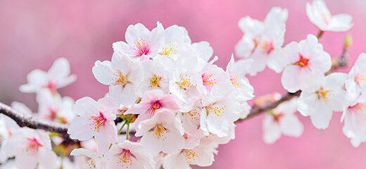 aprovecha a sacar fotos esta primavera